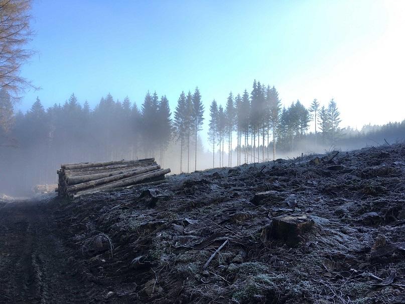 Waldarbeiten_November
