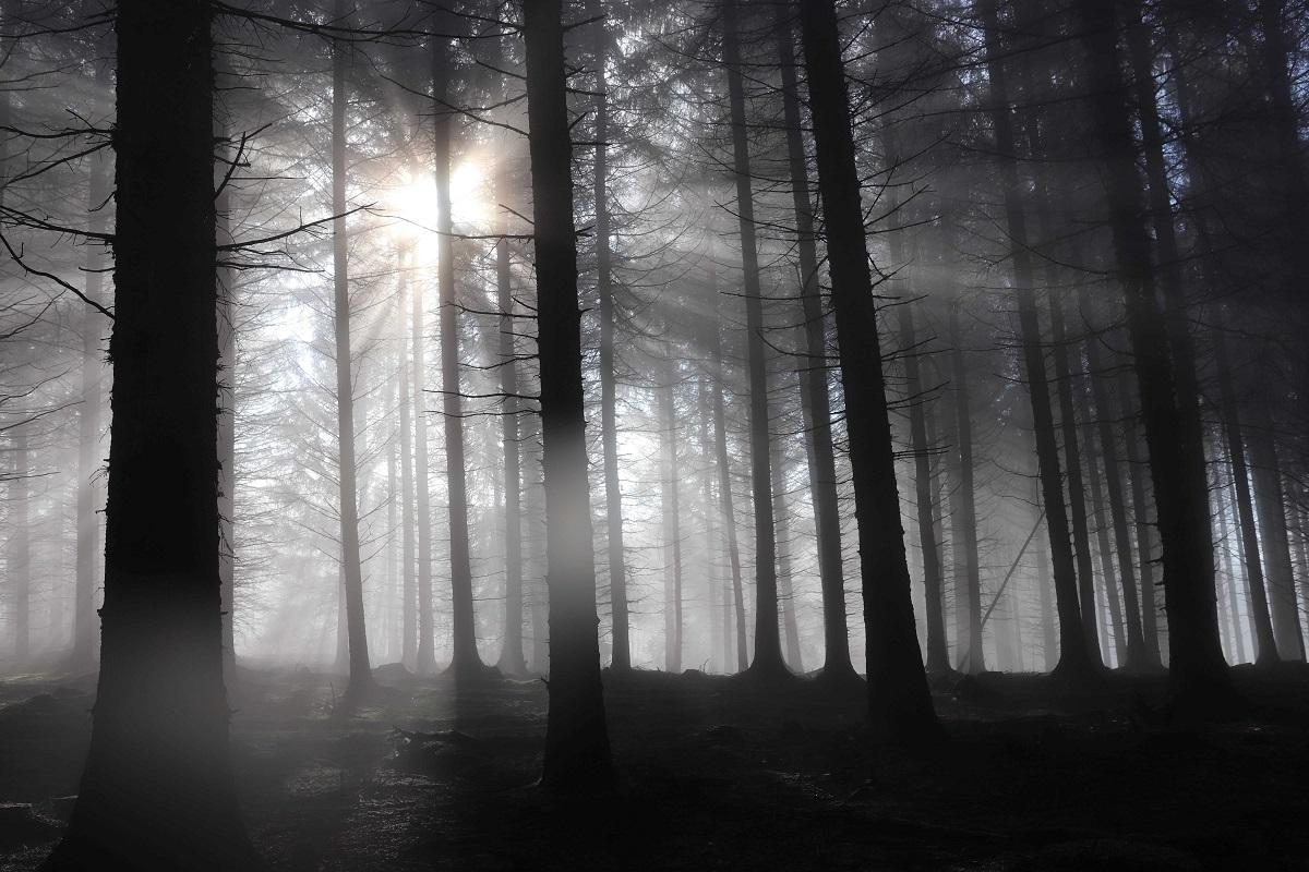 Wald_November